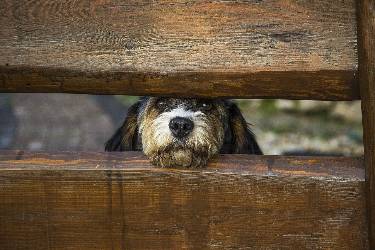 собачья преданность фото